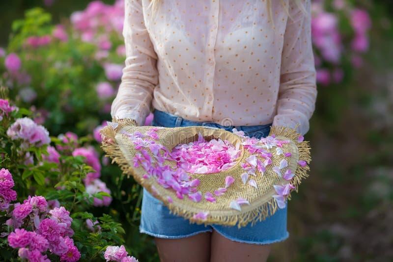 Mujer blanda joven bonita que camina en el campo de las rosas de té Los vaqueros que llevan de la señora rubia y el sombrero retr foto de archivo