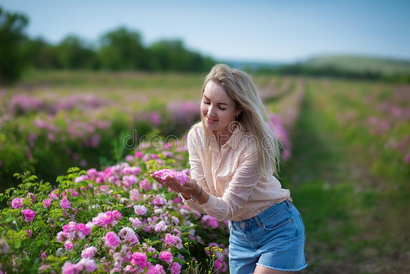 Mujer blanda joven bonita que camina en el campo de las rosas de té Los vaqueros que llevan de la señora rubia y el sombrero retr imagenes de archivo
