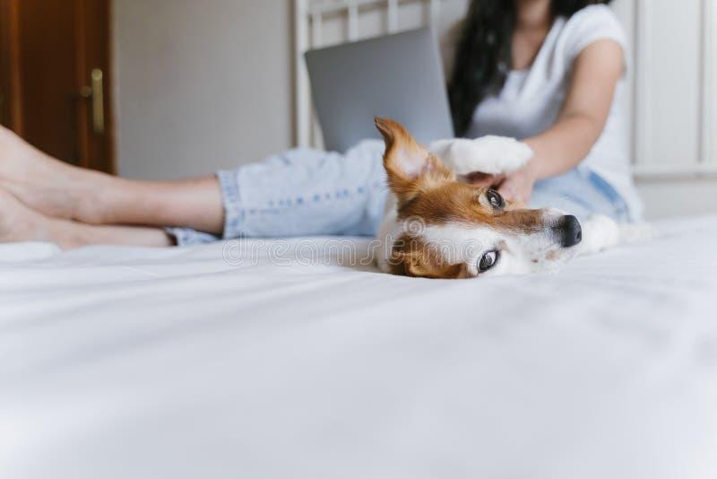 Mujer caucásica joven en la cama que trabaja en el ordenador portátil Pequeño perro lindo que miente además de Amor para los anim foto de archivo libre de regalías