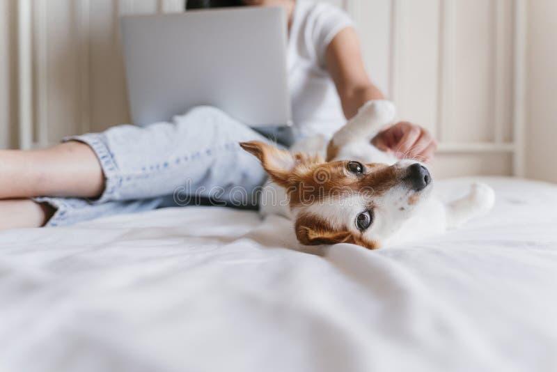 Mujer caucásica joven en la cama que trabaja en el ordenador portátil Pequeño perro lindo que miente además de Amor para los anim fotos de archivo