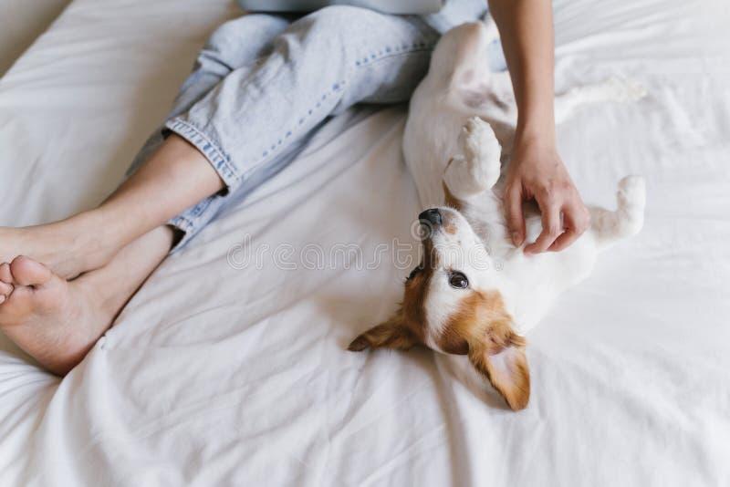 Mujer caucásica joven en la cama que trabaja en el ordenador portátil Pequeño perro lindo que miente además de Amor para los anim fotografía de archivo