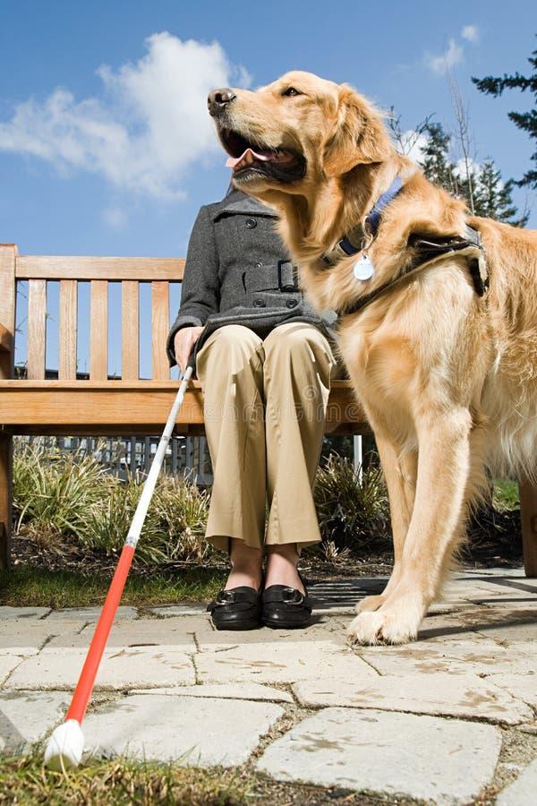 Mujer ciega y un perro guía fotos de archivo
