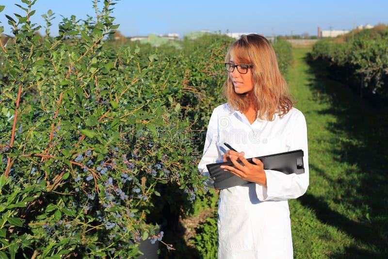 Mujer como inspector en una plantación de la comida fotos de archivo libres de regalías