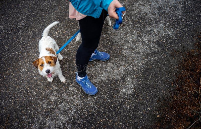 Mujer con el perro en una trayectoria de bosque, alza en las montañas imagen de archivo libre de regalías