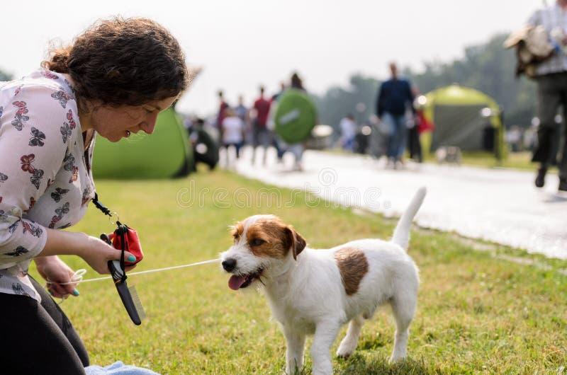 Mujer con el terrier de Russell del enchufe en un parque del otoño imagen de archivo