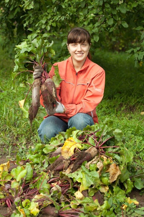 Mujer con la cosecha de las remolachas imagen de archivo