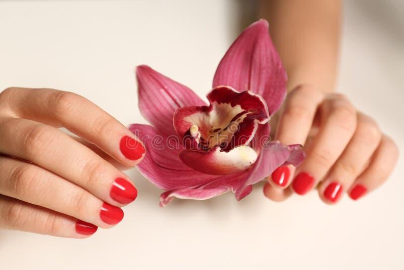 Mujer con la flor roja en blanco, primer de la tenencia de la manicura Tendencias del esmalte de uñas imagenes de archivo