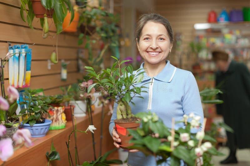 Mujer con la planta de los ficus (bonsai) en tienda fotos de archivo