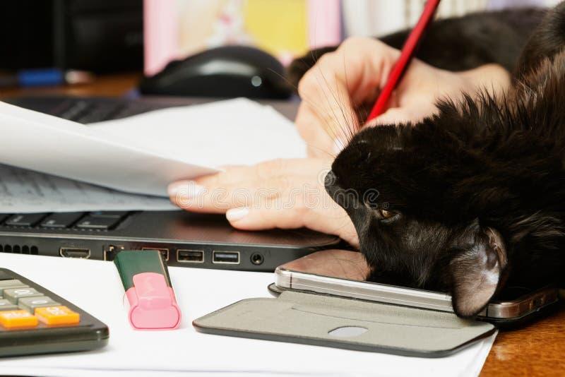 Mujer con laptop y gato imagen de archivo