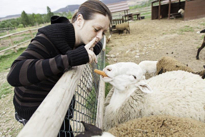 Mujer con las ovejas imagen de archivo libre de regalías