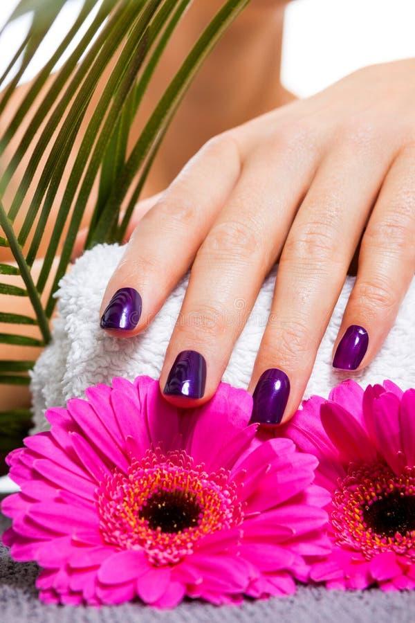 Mujer con los clavos púrpuras manicured hermosos imagen de archivo libre de regalías