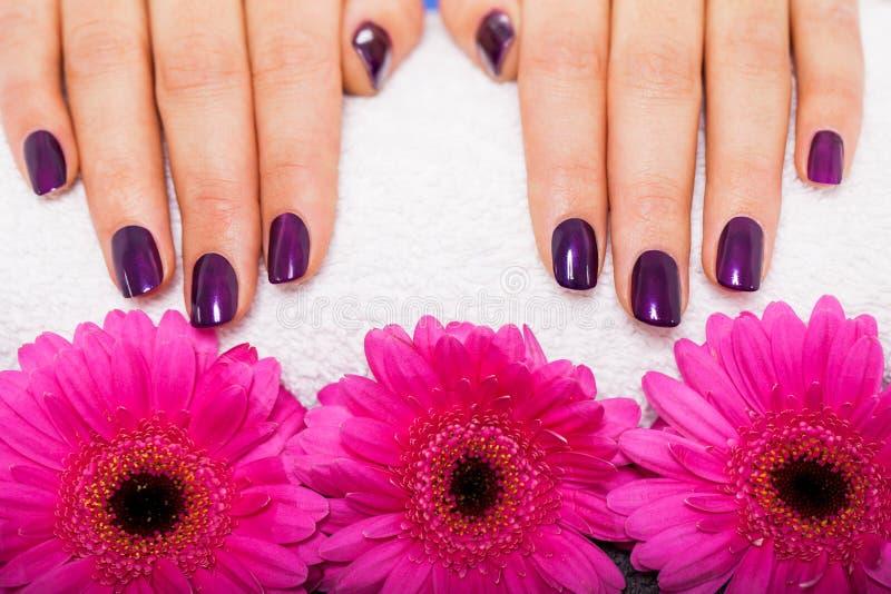 Download Mujer Con Los Clavos Púrpuras Manicured Hermosos Imagen de archivo - Imagen de elegante, cuidado: 41902299