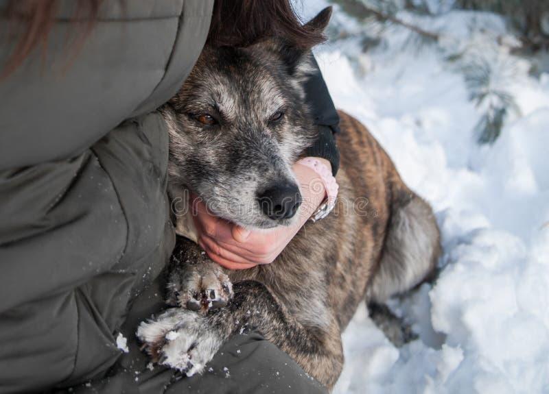 Mujer con su perro al aire libre imagen de archivo