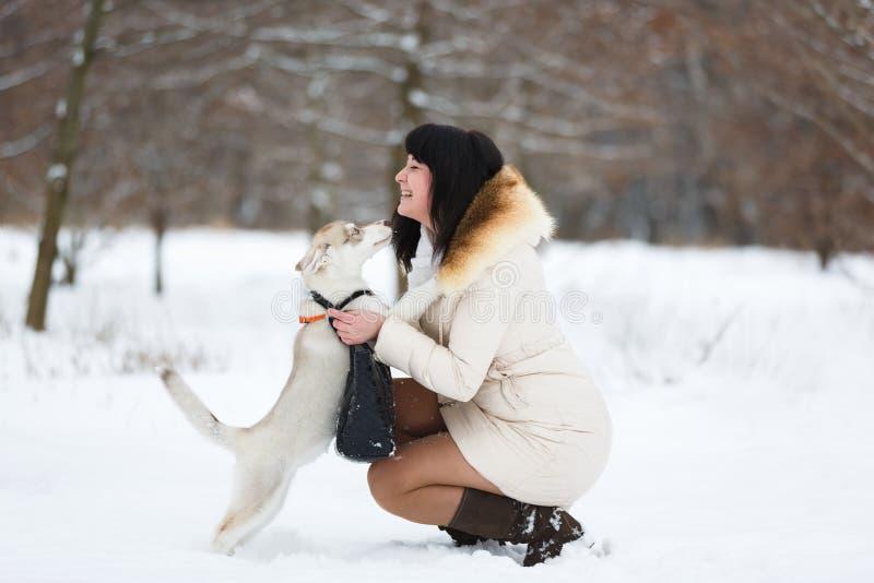 Mujer con un perrito fornido apacible imagen de archivo libre de regalías