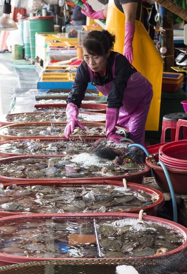 Mujer coreana que vende los mariscos frescos en el mercado de pescados complejo de Inchon fotografía de archivo