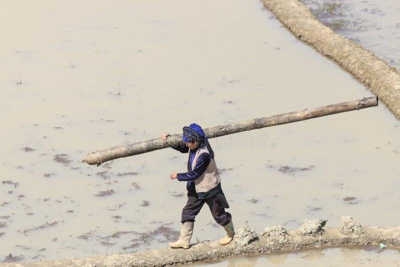 Mujer de Hani que trabaja en un arroz de arroz en YuanYang imagenes de archivo