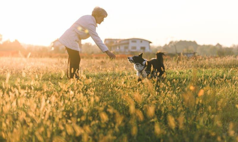 Mujer de la Edad Media que juega con su perro del border collie fotos de archivo libres de regalías