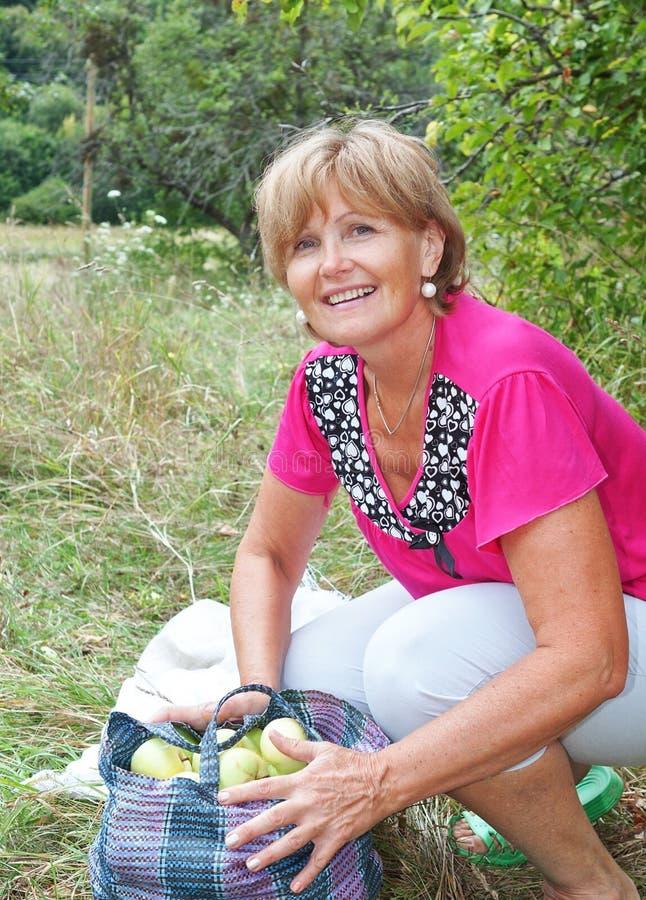 Mujer de mediana edad en la huerta para escoger manzanas. imagen de archivo