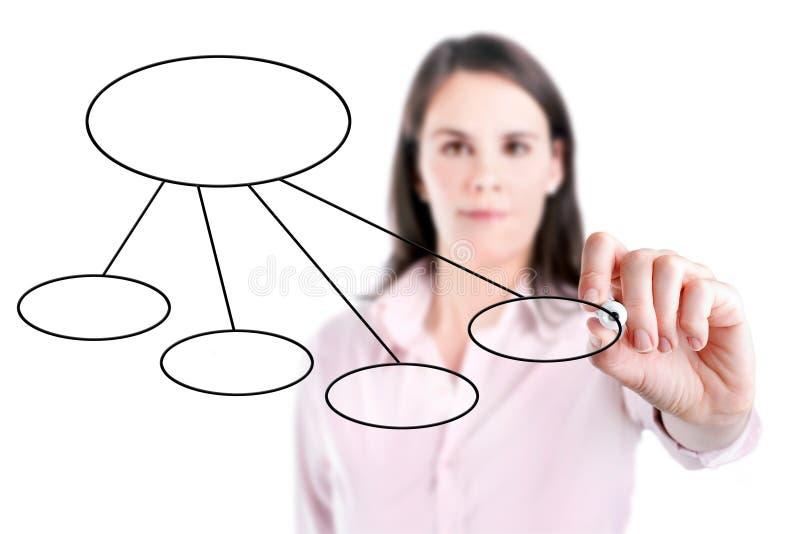 Mujer de negocios joven que dibuja un organigrama 3, fondo blanco. imagen de archivo