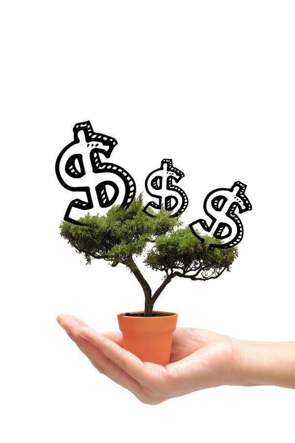Mujer de negocios que sostiene el árbol del dinero de la idea en pequeño pote imagenes de archivo