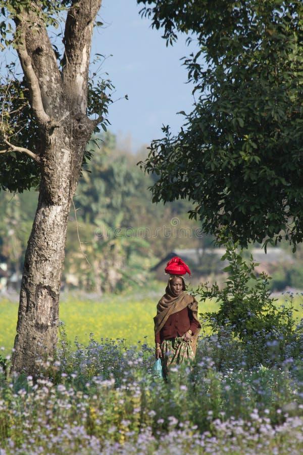 Mujer de Taru que camina en el campo de Terai en Nepal imagen de archivo