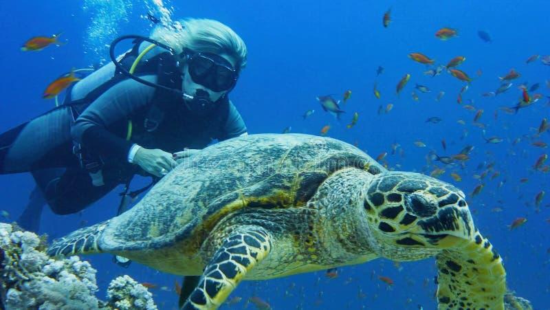 Mujer del buceador con la tortuga de mar foto de archivo