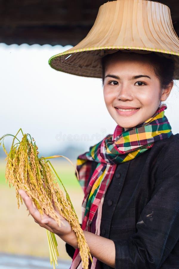 Mujer del granjero que sostiene el arroz y que se sienta en cabaña en el campo del arroz imágenes de archivo libres de regalías