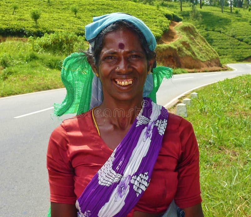 Mujer del recogedor del té de Sri Lanka fotos de archivo libres de regalías