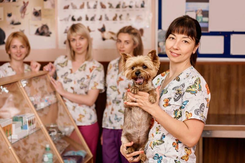 Mujer del veterinario con un perro fotos de archivo