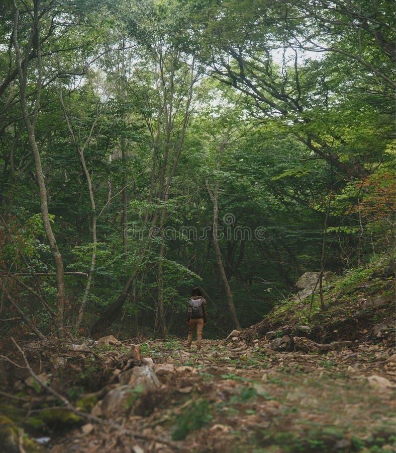 Mujer del viajero que camina en bosque del verano foto de archivo