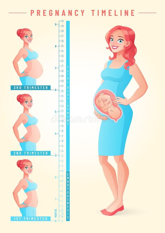 Mujer embarazada con el feto Ejemplo del vector de la cronología del embarazo stock de ilustración