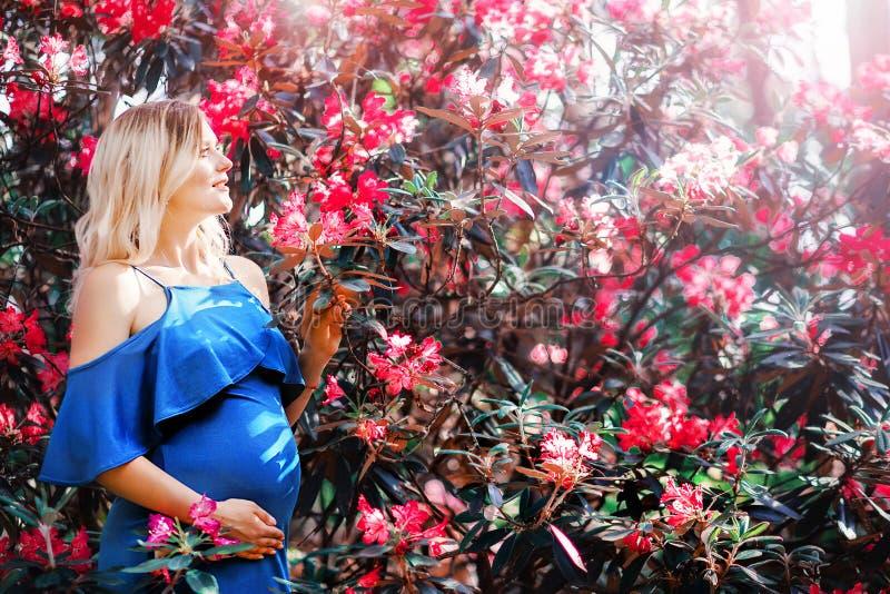 Mujer embarazada en el fondo de un arbusto con las flores rojas fotografía de archivo