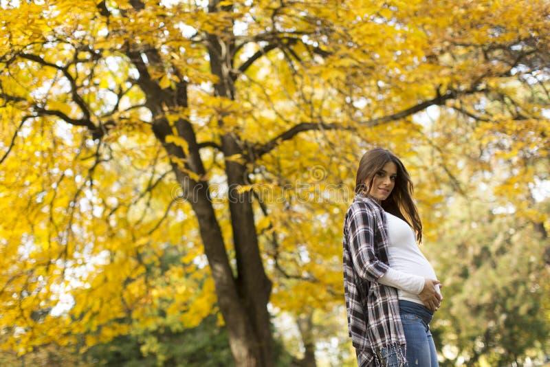 Mujer embarazada en el parque del otoño imagenes de archivo