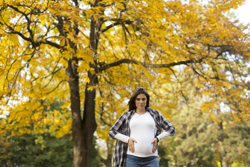 Mujer embarazada en el parque del otoño foto de archivo