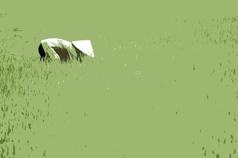 Mujer en el campo del arroz, Vietnam stock de ilustración