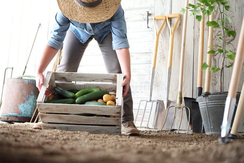 Mujer en el huerto que sostiene la caja de madera con las verduras de la granja Cosecha del oto?o y alimento biol?gico sano imagen de archivo libre de regalías