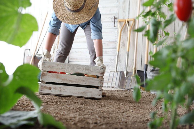 Mujer en el huerto que sostiene la caja de madera con las verduras de la granja Cosecha del oto?o y alimento biol?gico sano imágenes de archivo libres de regalías