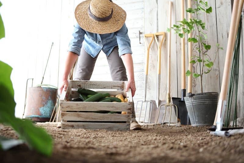 Mujer en el huerto que sostiene la caja de madera con la verdura de la granja fotografía de archivo libre de regalías