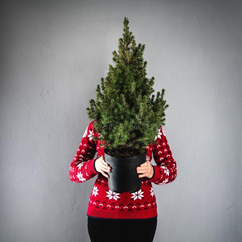 Mujer en el suéter rojo de la Navidad que sostiene un árbol de navidad decorativo en pote en fondo gris imagenes de archivo