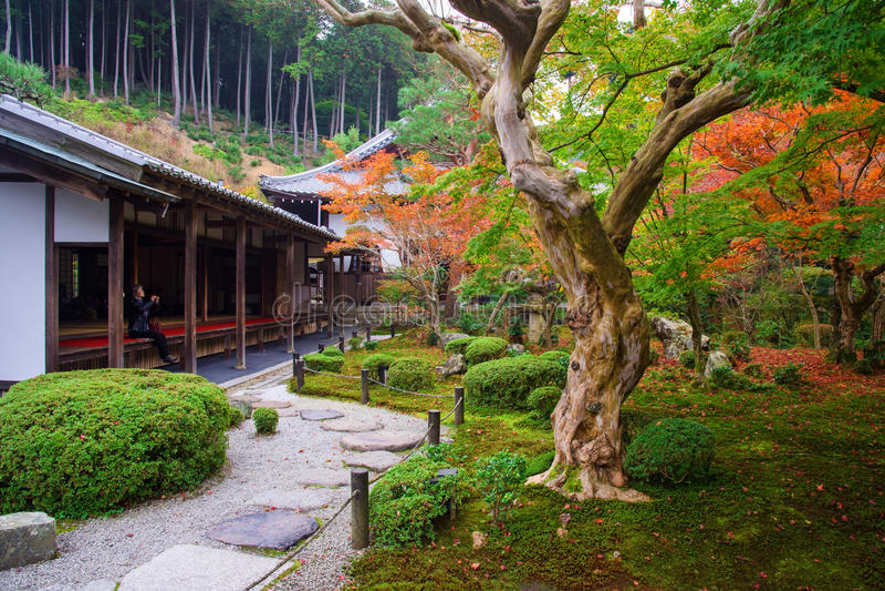mujer en el templo de Enkoji para gozar del jardín del otoño imagen de archivo