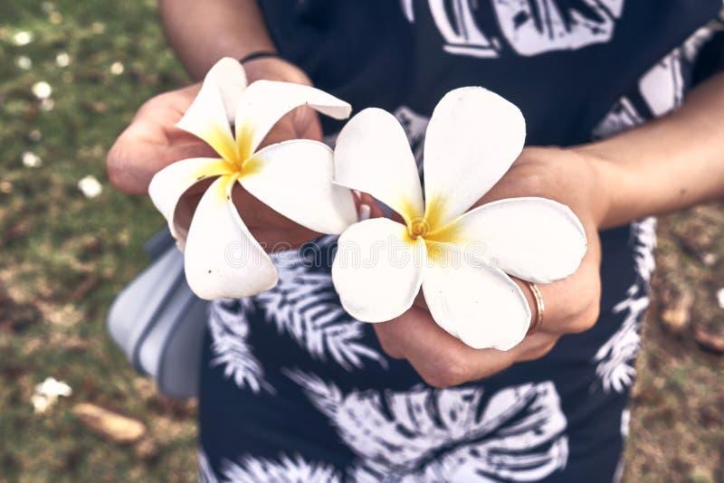 Mujer en el vestido hawaiano que lleva a cabo el Plumeria Kauai, una de las flores tropicales populares de Hawaii fotos de archivo
