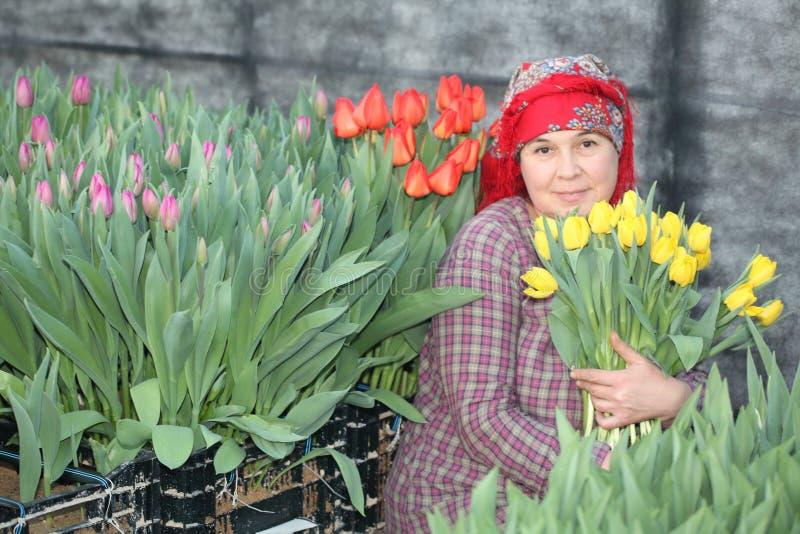 Mujer en la cosecha de tulipanes fotos de archivo libres de regalías