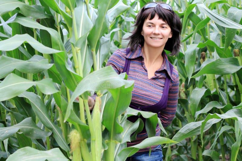 Mujer en maíz imagen de archivo libre de regalías