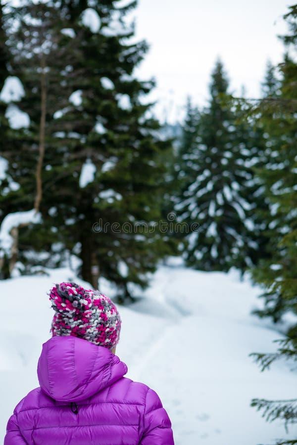 Mujer en rastro a través de los pinos, montañas de Karkonosze, Polonia fotografía de archivo libre de regalías
