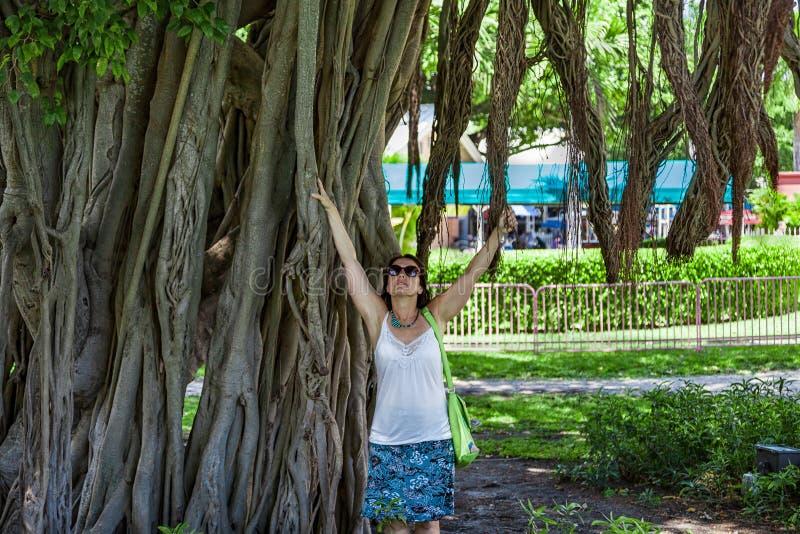 Mujer en un árbol gigante en Miami céntrica foto de archivo
