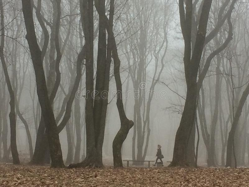 Mujer en un parque fotografía de archivo