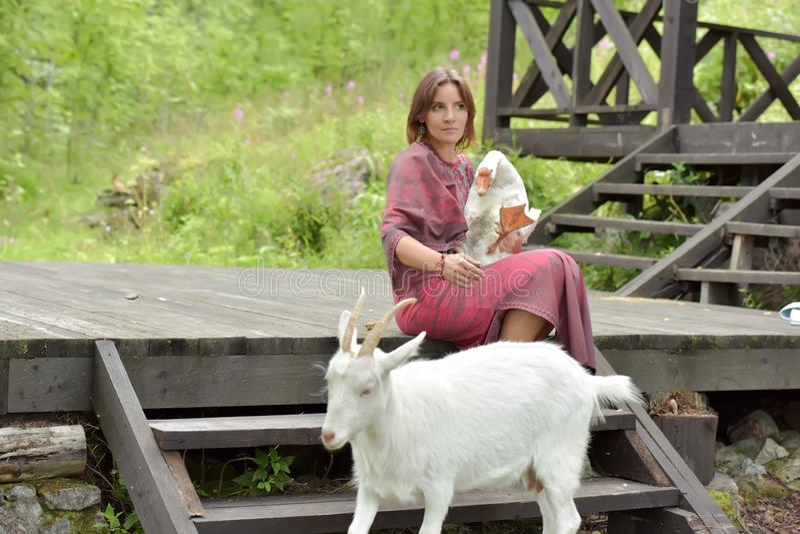 Mujer en un vestido de Borgo?a en una granja con un ganso en sus brazos y una cabra blanca imagen de archivo