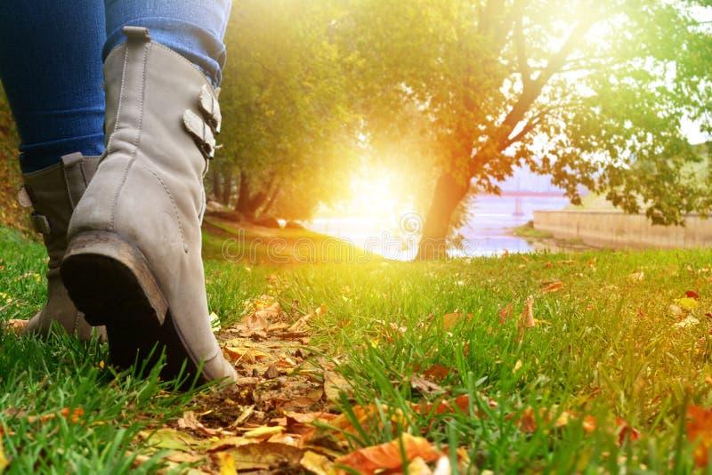 Mujer en zapatos grises y vaqueros que caminan en la trayectoria de bosque del otoño imagenes de archivo