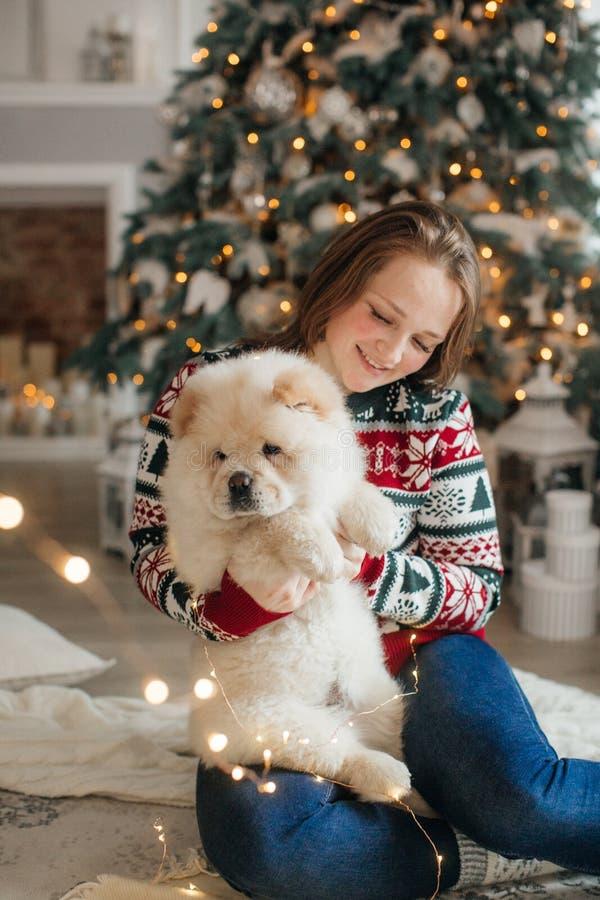 Mujer hermosa con el perro del chow-chow en decoraciones de la Navidad fotografía de archivo libre de regalías
