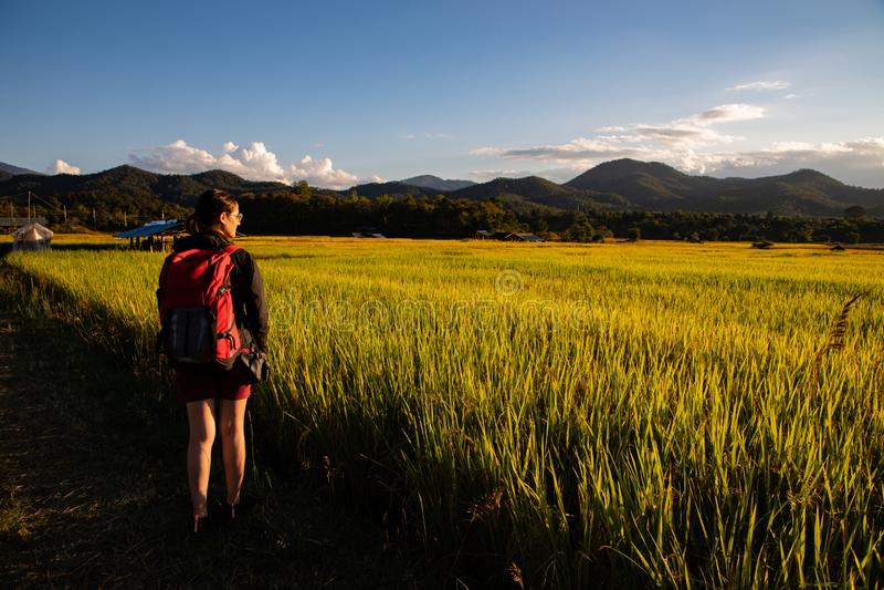Mujer hermosa del viajero con la mochila en campos del arroz en Tailandia fotografía de archivo libre de regalías